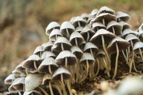 Photo by Ashish Raj on Pexels.com
